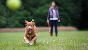 Wiele samorządów decyduje się wprowadzić zakaz przyprowadzania psów na tereny przeznaczone do zabaw dzieci (głównie place zabaw) oraz uprawiania sportu, a także na tereny rekreacyjne (np. parki)