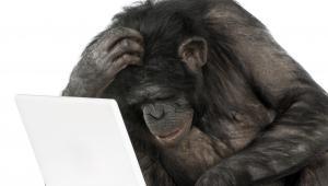 Szympans i komputer