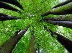 Polityka Ekologiczna Państwa 2030 bez słońca i wiatru. W redukcji emisji CO2 pomóc mają lasy