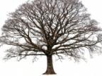 Mieszkańcy Etiopii posadzili ponad 200 mln drzew w jeden dzień