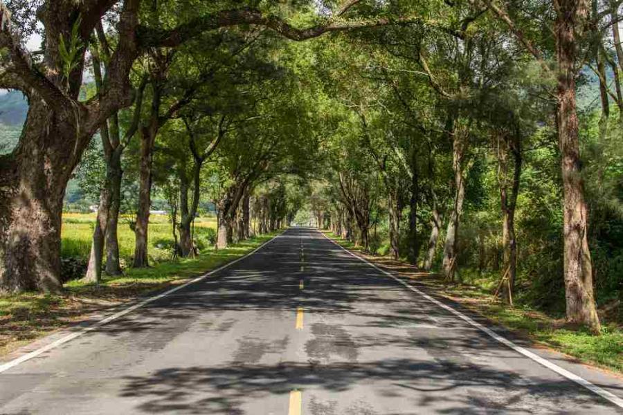 Droga, transport, drzewa