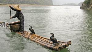 Chiński rybak